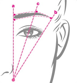brow-diagram1.jpg